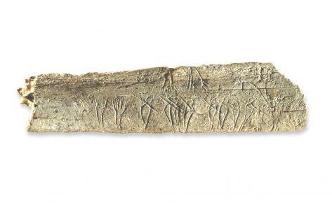 Costella gravada (antropomorfs i bisó)