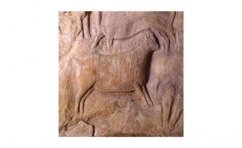Cabra salvatge – panell 6